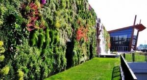 雨林生态植物墙