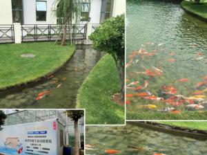 兰州鱼池过滤系统哪家好
